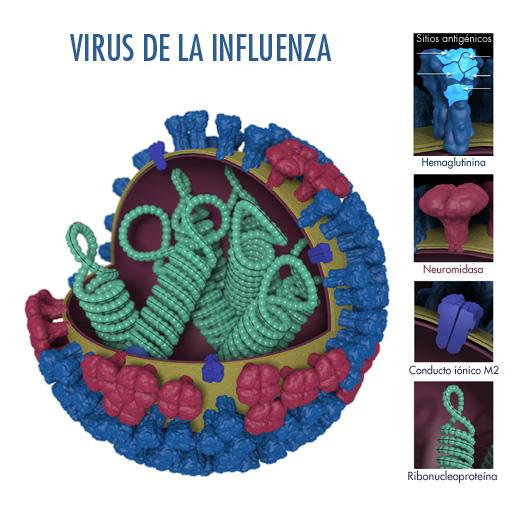 Figura 1. Características del virus de la influenza