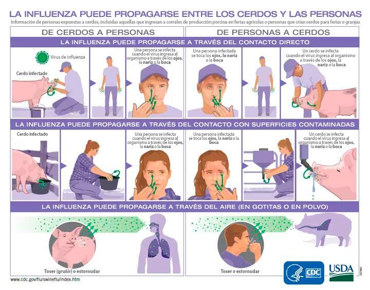 La influenza puede propagarse entre los cerdos y las personas