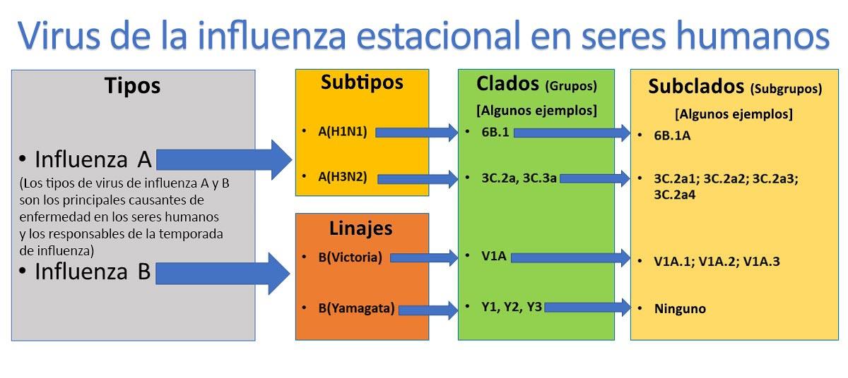 Virusde la influenza estacional en seres humanos
