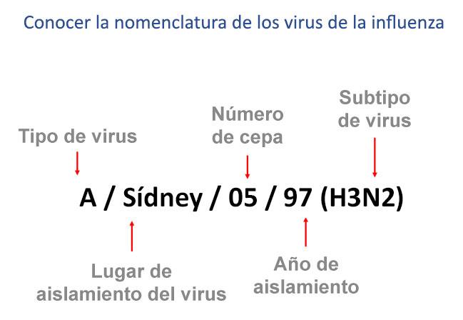 conocer la nomenclatura de los virus de influenza, tipo de virus, lugar de aislamiento del virus, número de cepas, año de aislamiento, subtipo de virus, como por ejemplo sydney o5 97 (h3n2)